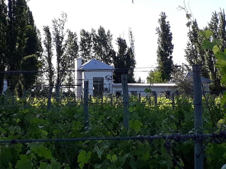 Santa Faustina House , casona entre viñedos