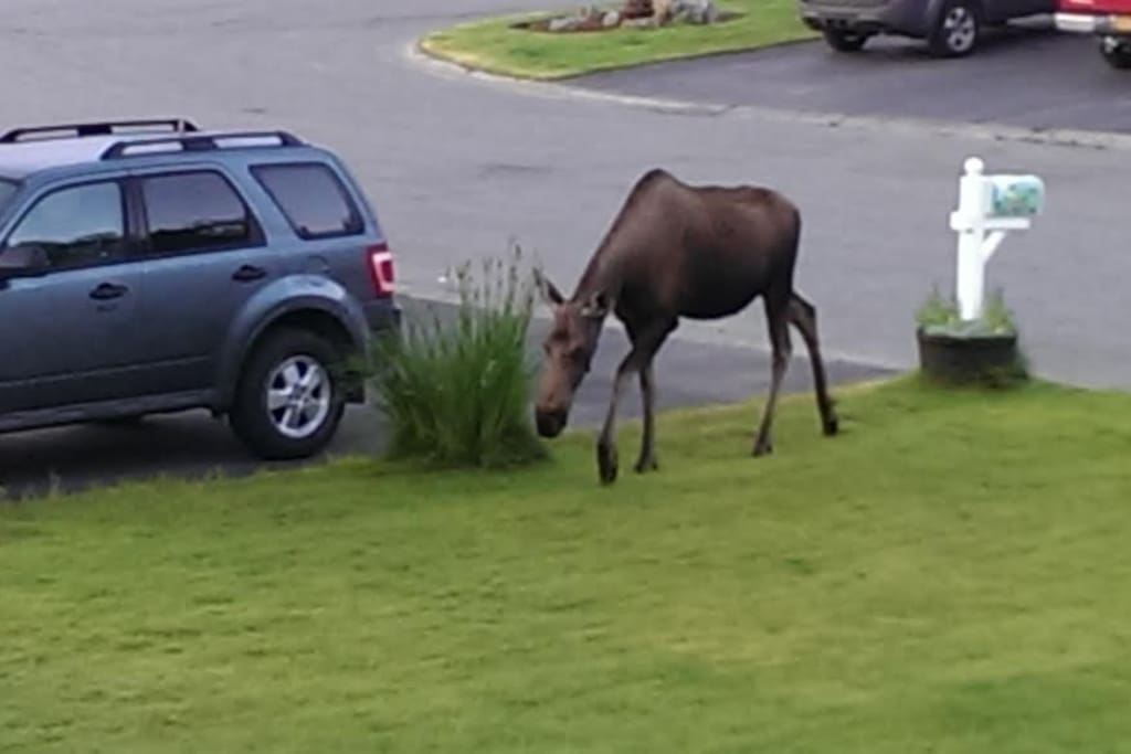 A beautiful visitor in the front yard