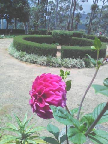Villa Knuckles - Kandy
