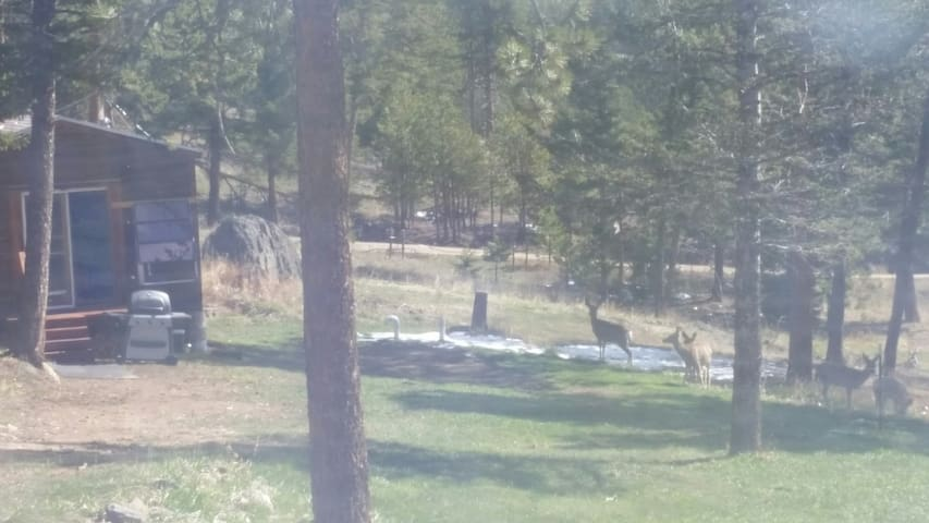 Deer grazing right by the cabin