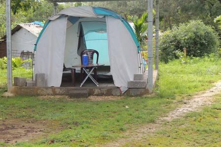 1BR Tent in Dandeli Jungle - Breakfast Included