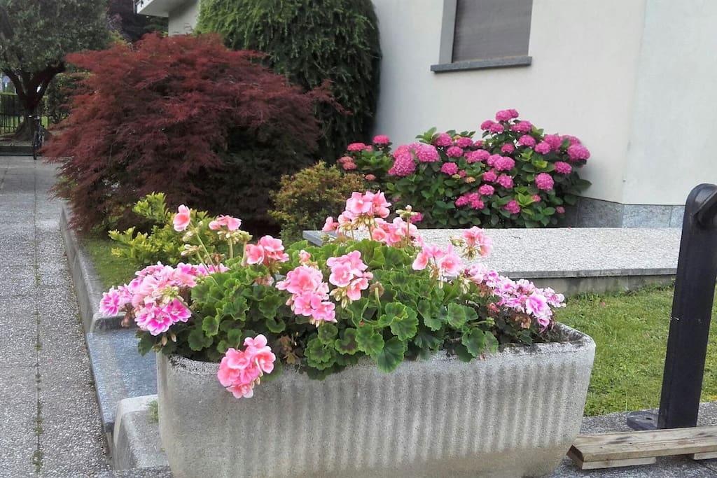 Il nostro giardino fiorito