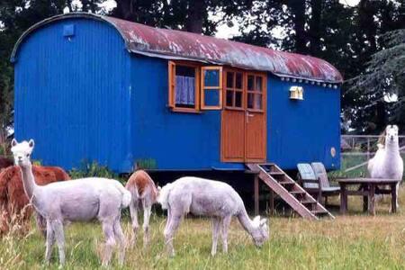 Zirkuswagen auf der Alpakaweide - Entspannung pur!