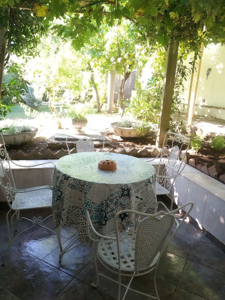 Enjoy your aperitivo or lunch under the vine trees