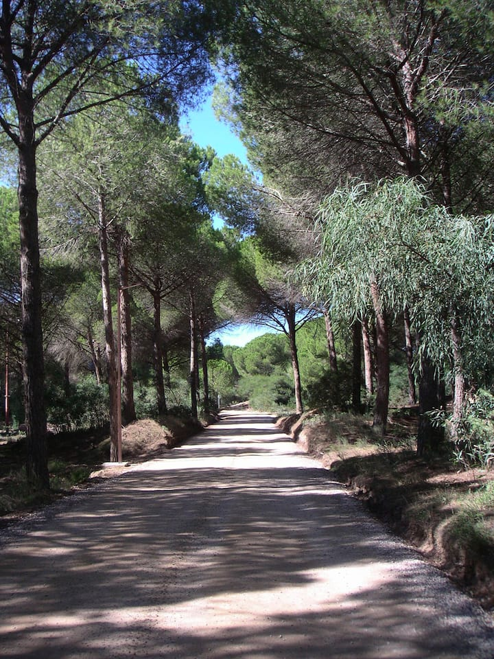 Is Arenas Narbolia: mare natura golf