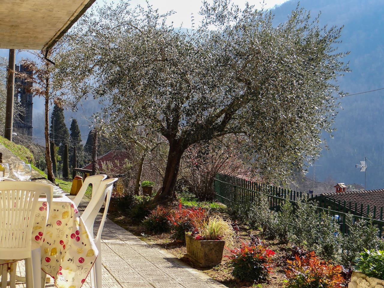 This hearty olive tree gives Villa Corsena a truly Tuscan feel.