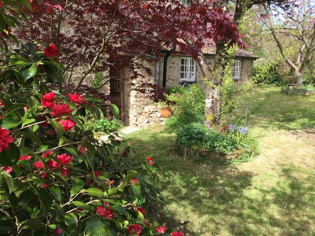 Charming old cottage, spacious rooms & garden - Culmstock