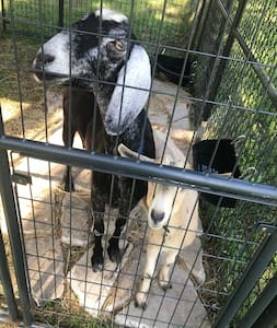 Glamping on a Green Acre with Goats!