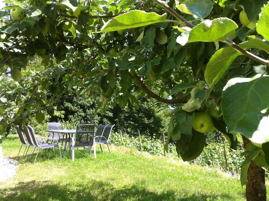 Sitzplatz beim Apfelbaum