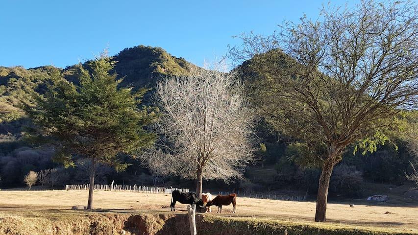 """Cabaña  Corral de Piedras """"Sucursal del Paraíso"""""""