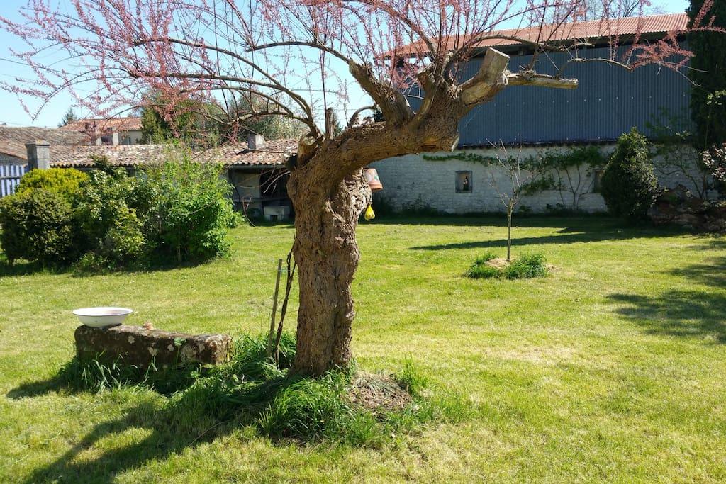 Une autre vue du jardin...