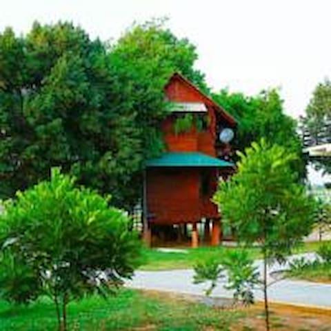 Tree House Upper