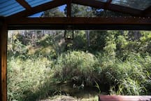 View over waterhole from verandah