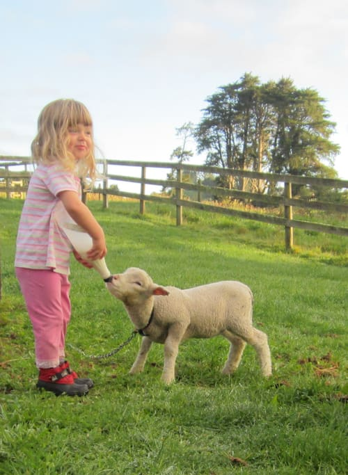 Depending on the time of year, there might be a pet lamb to meet...