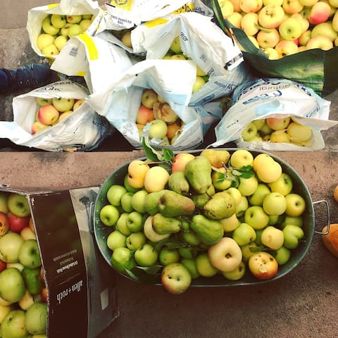 apples from the orchard (seasonal)