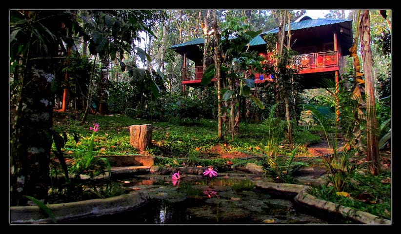 Monsoon Retreats Ecostay: Twin Tree house cottage