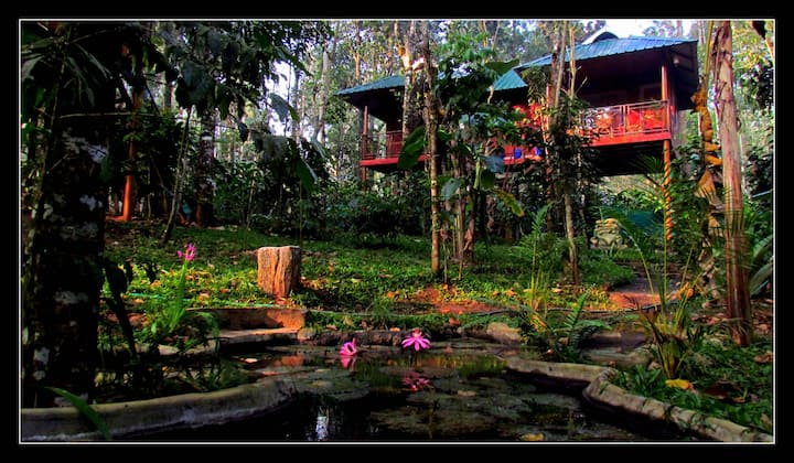 Monsoon Retreats Ecostay: Twin Tree house cottage