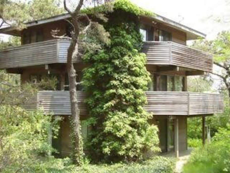 architectural treehouse pagoda