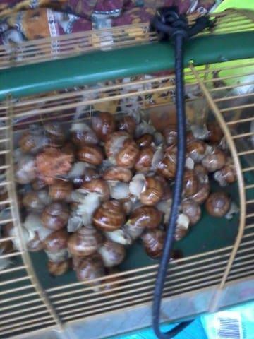 Escargots du causse