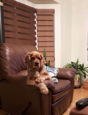 Le chien de la maison est curieux, enjoué malgré ses 8 ans.  Si vous avez peur des chiens ou si vous ne les aimez pas, sachez qu'il est en liberté à la maison.  Il ne va pas dans les chambres à moins que vous ne l'invitiez ;)  Mais attention à vos délices qui s'y trouvent !  Il est gourmand et fine bouche :)
