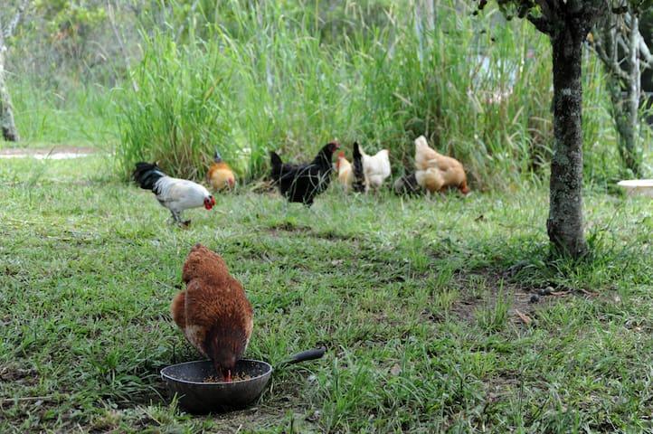 'Guunuwa' Self Sufficiency Farm - Valla - Rumah