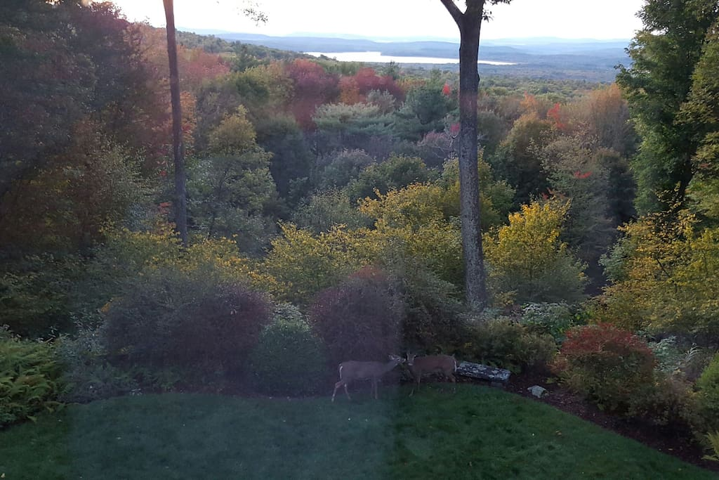 Beginnings of fall and our deer family neighbors who love our garden!