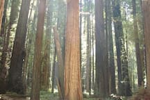 Jedediah Smith State Park - Beautiful Redwoods only 30 mins. south