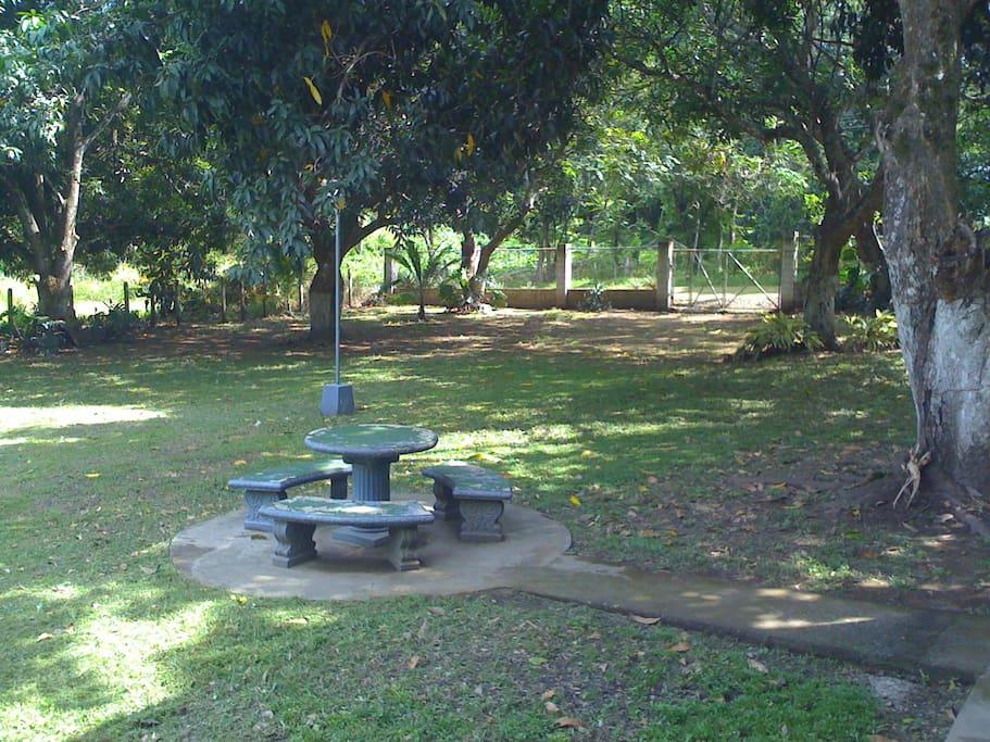 En el acceso principal podrá disfrutar de la gran sombra generada por arboles de mango.