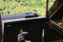 Every one has a favorite spot for an afternoon nap! - Photo courtesy of a guest, used with permission. Maximum net occupancy: 2 persons at a time.