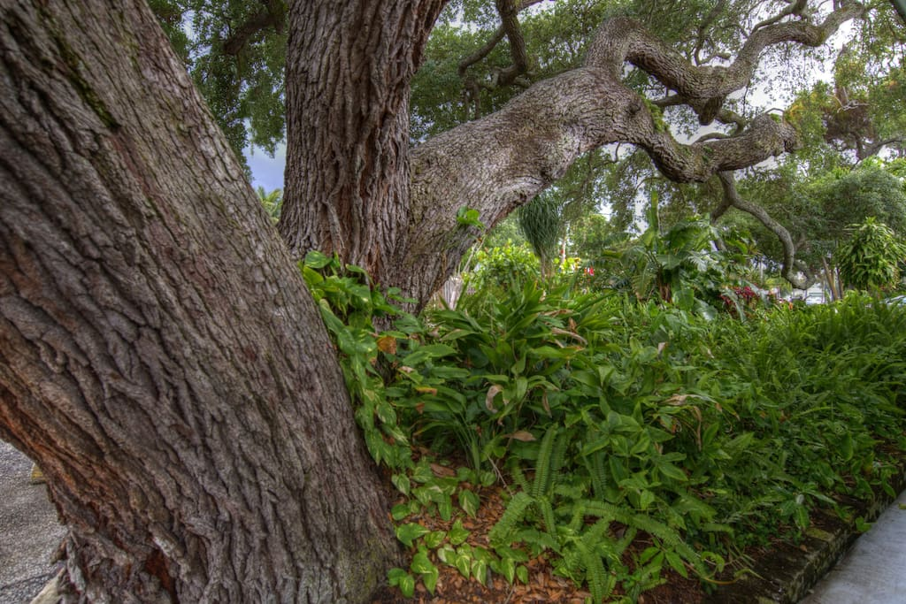 A 100+ Year Old Live Oak Welcomes You