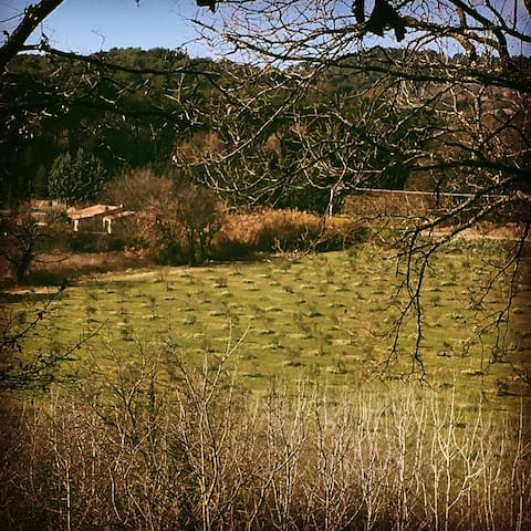 The house of the olive trees - Lourmarin - Ev