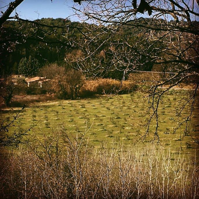 Voilà la maison, au bord du champ d'oliviers vue de la colline voisine