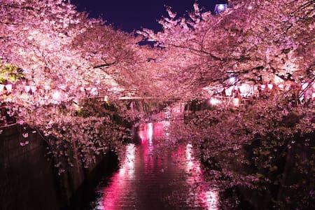 Shibuya & Shinagawa 5~8 mins ! Cherry Blossoms! - Meguro - Lejlighed