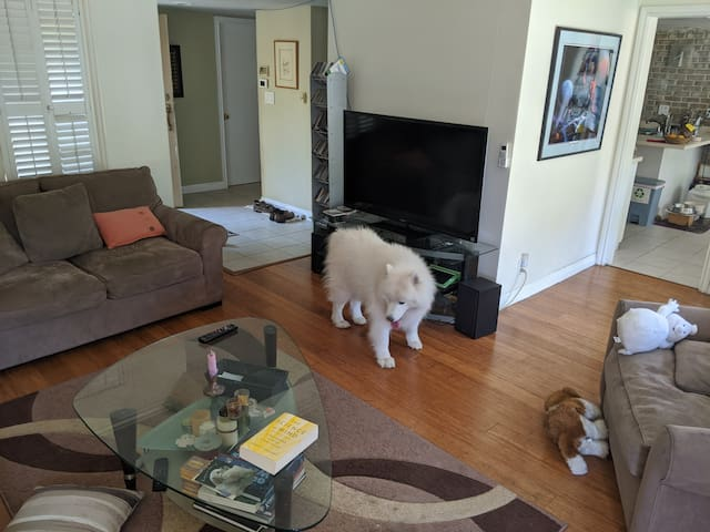 Living room area with Samoyed
