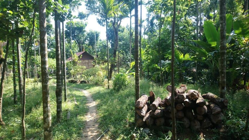 Annie's  Nature  Lodge I