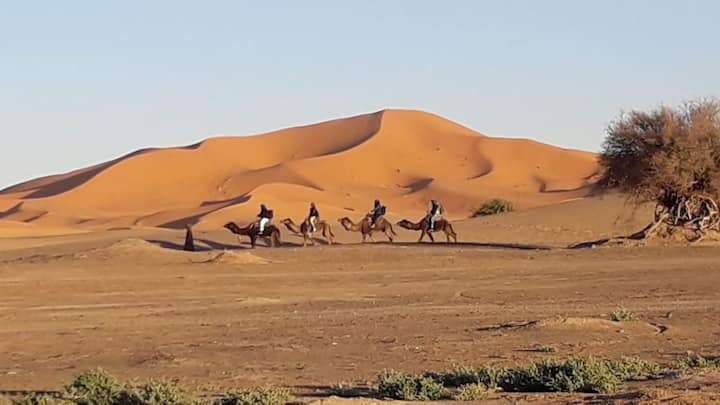 Desert typical luxury camp. Camel treks experience