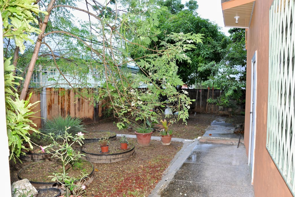 Front yard with fruits trees, herbs & plants