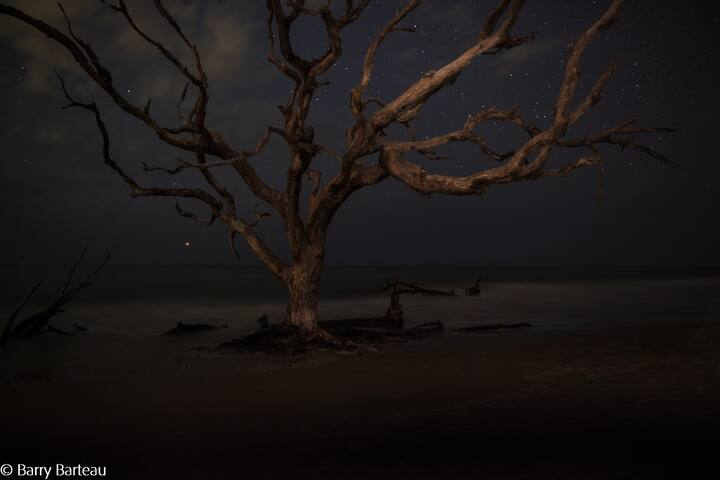 Jekyll's trees empty and alone under the night sky...