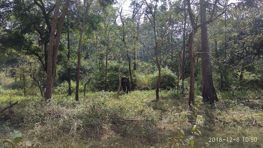 The lone tusker at the Wayanad Wildlife Reserve