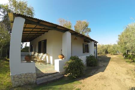 Dependance Villa Vololungo - Sperlonga - Villa
