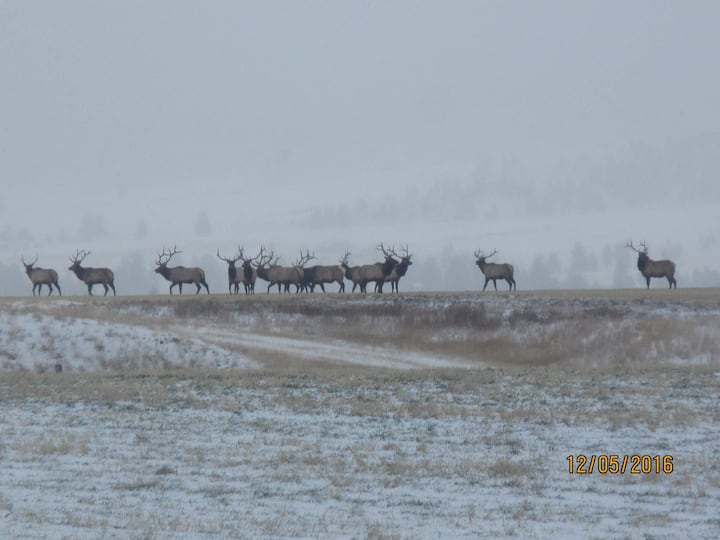 Montana Elk Hunting/Recreation Cattle Ranch