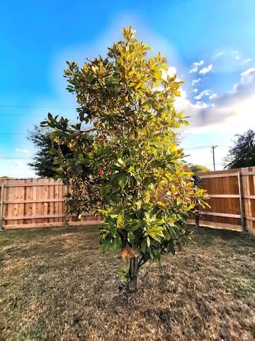Magnolia's End