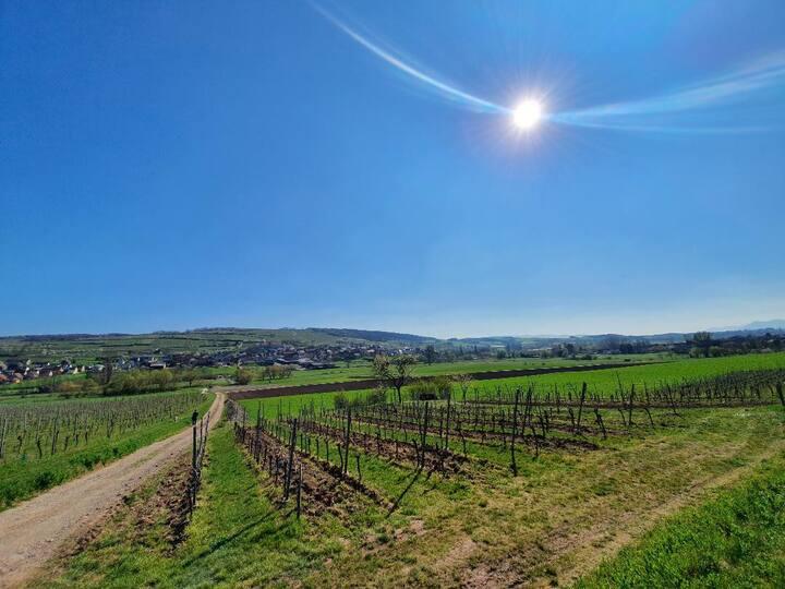 Meublé de la route des vins