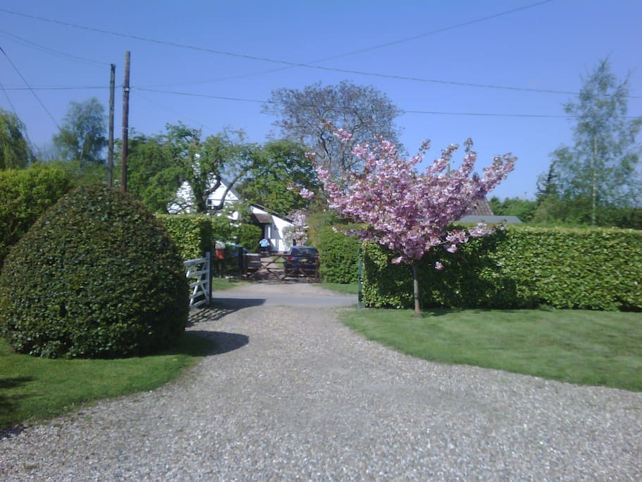 Entrance with flowering cherry