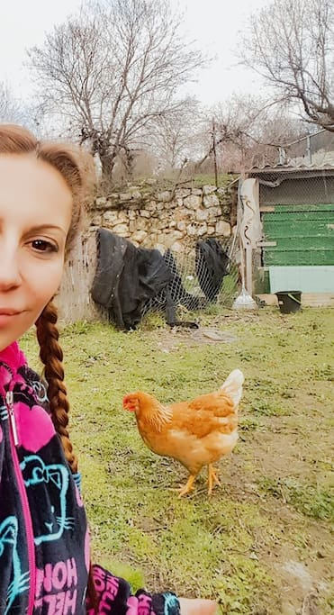 Las gallinas se venden huevos