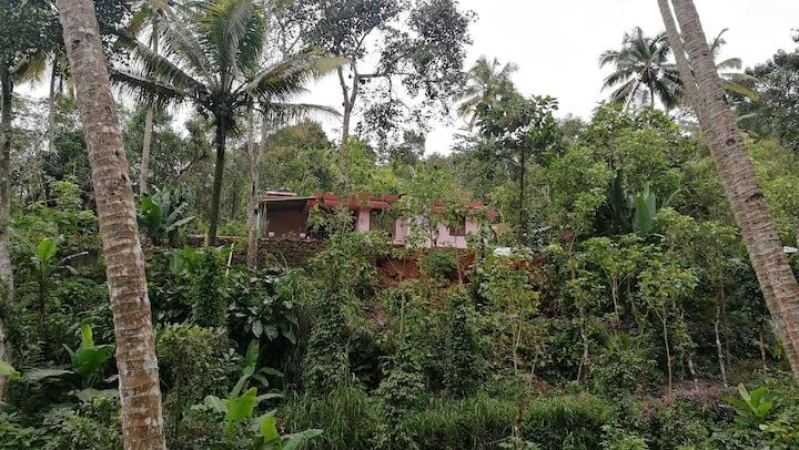Kerala Farm Stay in Idukki