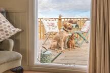Lounge window view