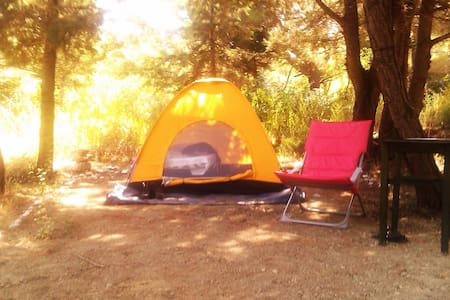 Camping Tent inside the  forest - Theologos - Tent