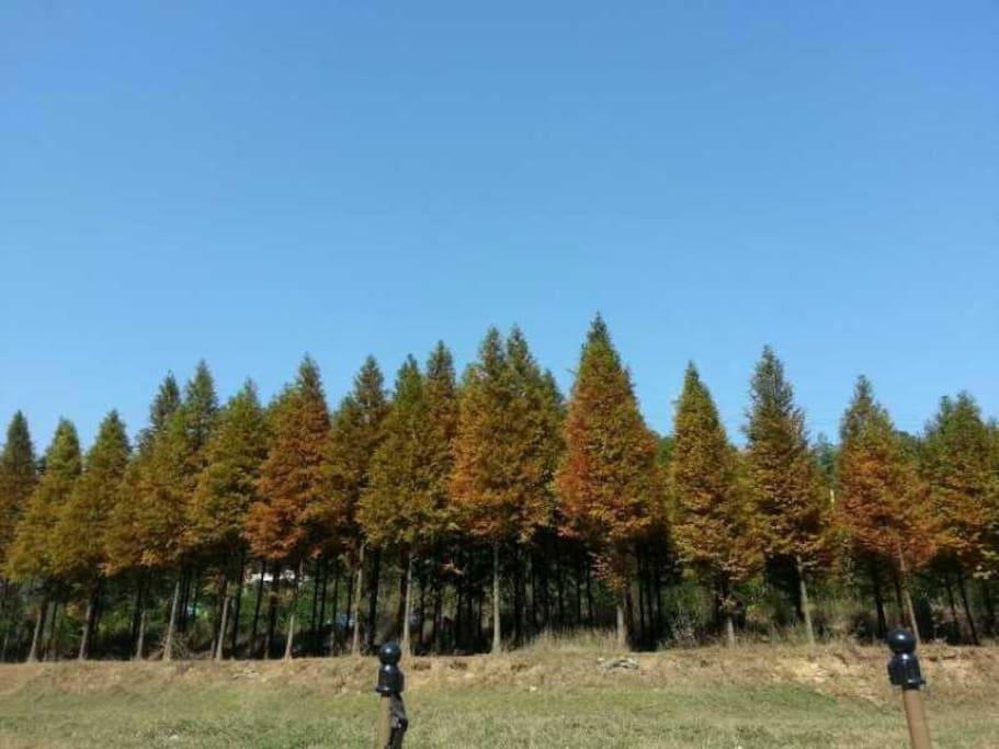 店主妈妈种的小树林,很多游客喜欢这里