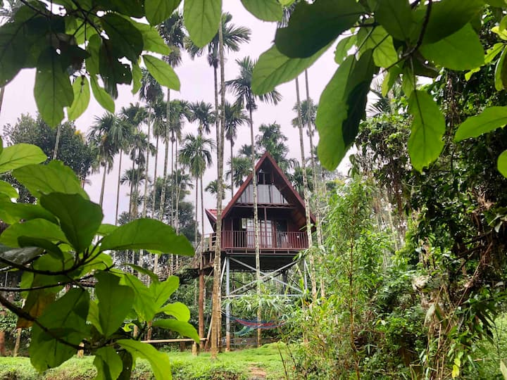 Wayanad Duplex Treehouse- Inaugural offer